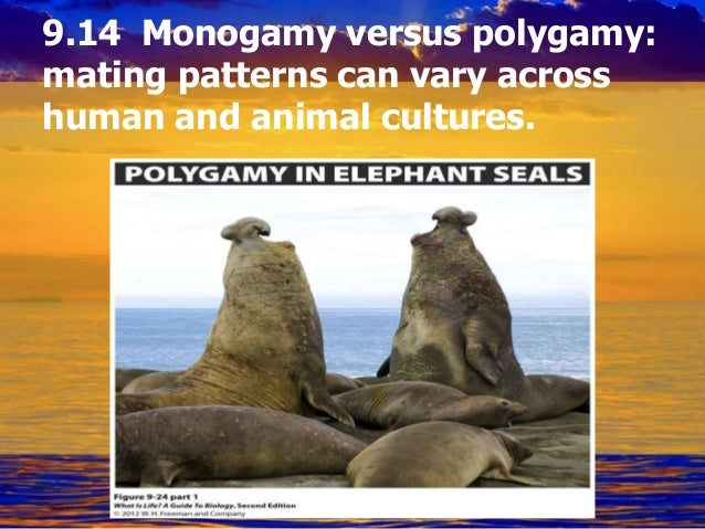 Define polygamy and polyandry dating 3