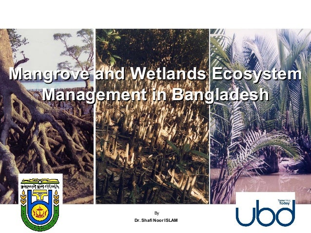 Mangrove and Wetlands EcosystemMangrove and Wetlands Ecosystem Management in BangladeshManagement in Bangladesh By Dr. Sha...