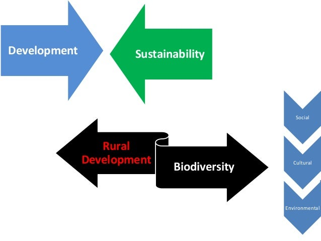 An Analysis of the Use of Forests in the Society