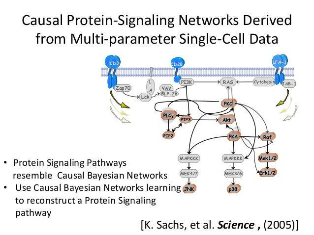 Causal Protein-Signaling Networks Derived      from Multi-parameter Single-Cell Data                       CD3            ...