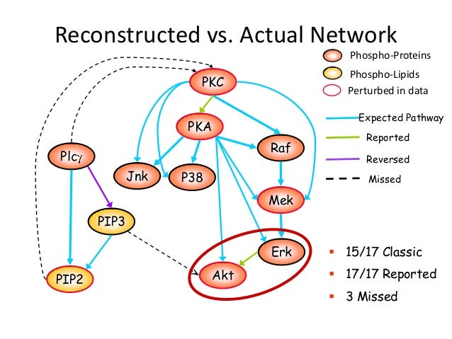 Reconstructed vs. Actual Network                                         Phospho-Proteins                                 ...