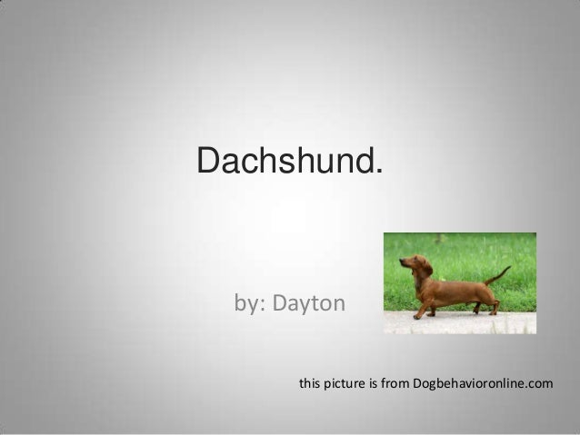 Dachshund.by: Daytonthis picture is from Dogbehavioronline.com