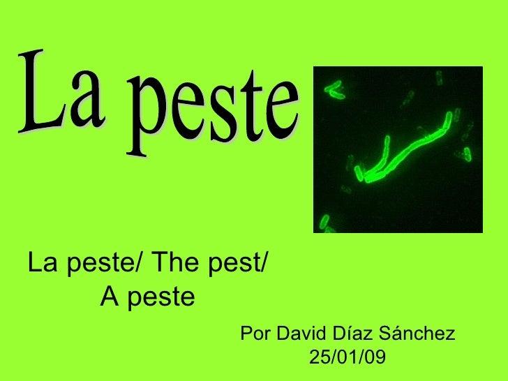 La peste/ The pest/ A peste Por David Díaz Sánchez 25/01/09 La peste