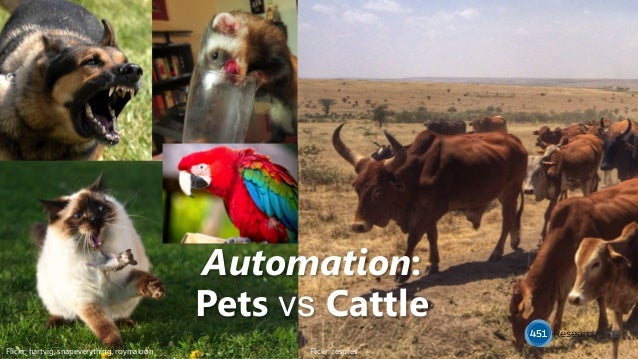 12 Flickr: respres Flickr: hartvig, snapeverything, roymaloon Automation: Pets vs Cattle