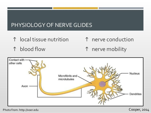 physioex cd exercise 3 nervous Physioex 9 exercise 5 activity 6 answerspdf free pdf download now   physioex 91- exercise 3 physioex 91- exercise 2 yes (muscles) sept 30 senses  & nerves  lab manual€+€physioex 91 cd + pal 30 cd apr 22€€€ physioex  exercise.