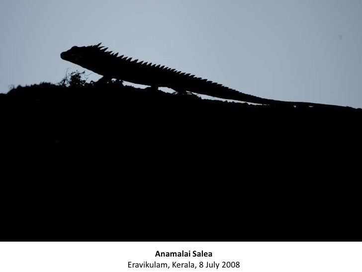 A Photo Journey thro the Jungles of India with KALYAN VARMA Slide 2
