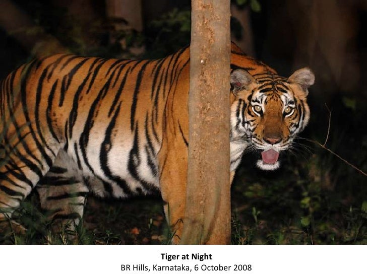 A Photo Journey thro the Jungles of India with KALYAN VARMA Slide 3
