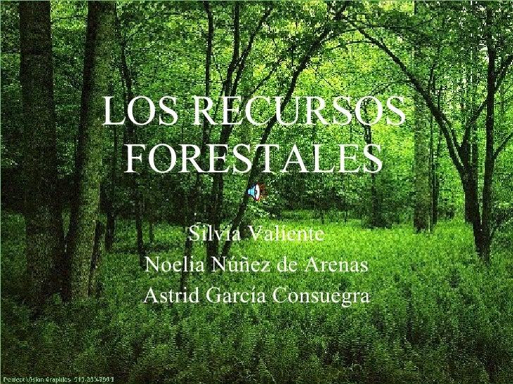 Los recursos forestales for Importancia de los viveros forestales