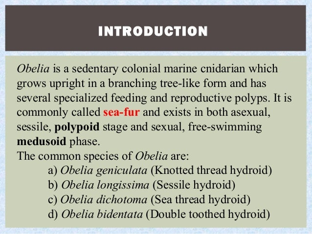 Asexual and sexual reproduction quizlet spanish