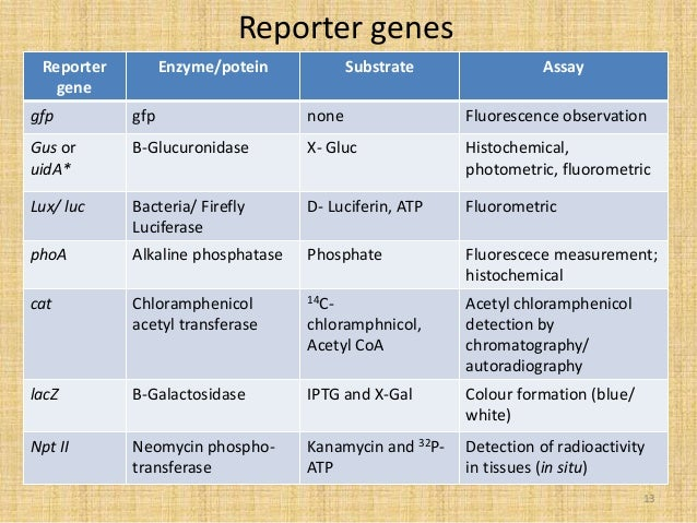 markers and reporter genes