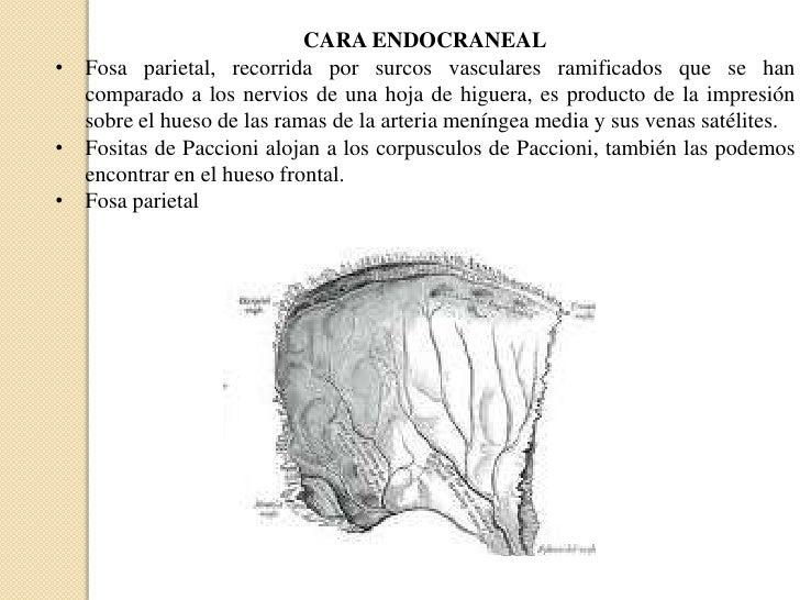 Moderno Huesos Del Cráneo Hoja De Etiquetado Bosquejo - hojas de ...