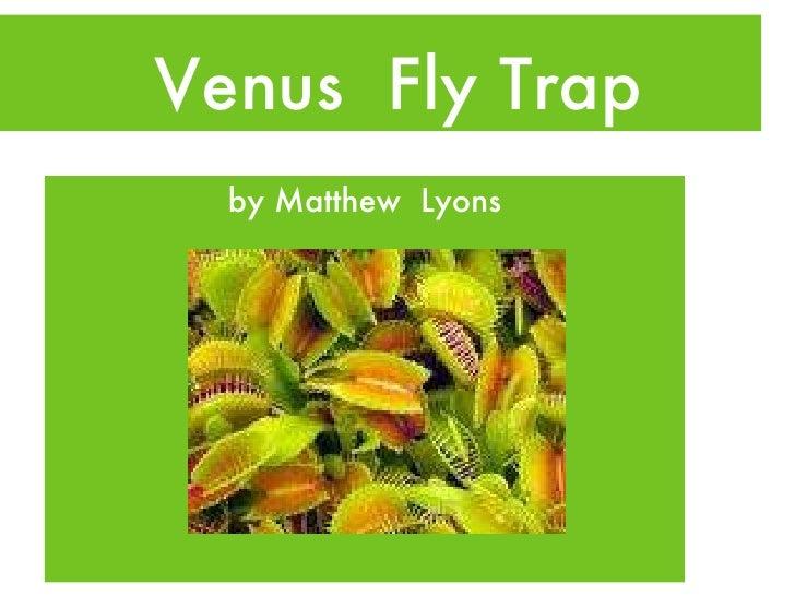 Venus  Fly Trap <ul><li>by Matthew  Lyons </li></ul>