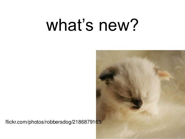 what's new?flickr.com/photos/robbersdog/2186879163/