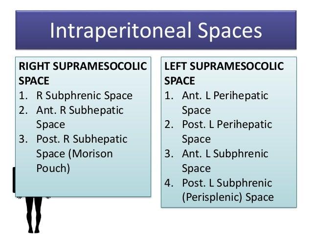 peritoneum intraperitoneal spaces