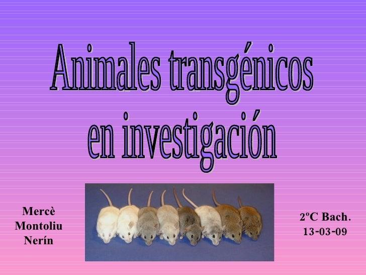 Animales transgénicos en investigación Mercè Montoliu Nerín 2ºC Bach. 13-03-09
