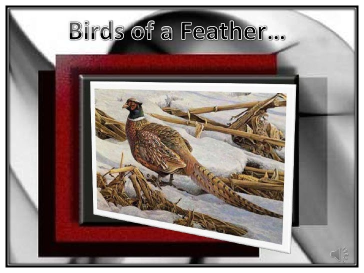 Birds of a Feather…<br />