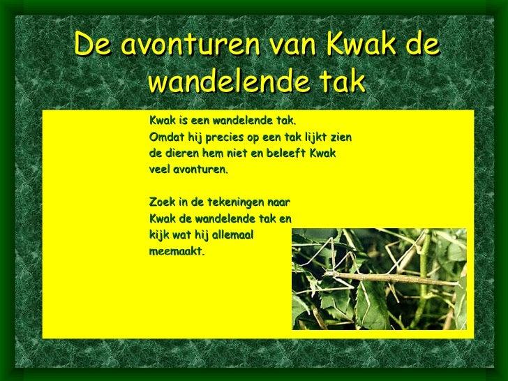 De avonturen van Kwak de wandelende tak <ul><ul><ul><ul><ul><li>Kwak is een wandelende tak. </li></ul></ul></ul></ul></ul>...