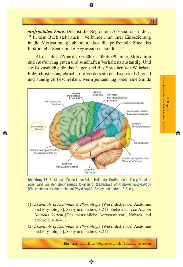 Ziemlich Anatomie Und Physiologie Kapitel 23 Bilder - Menschliche ...