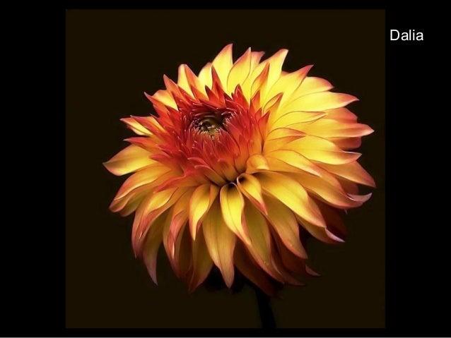 Flor de Taparon Venezuela