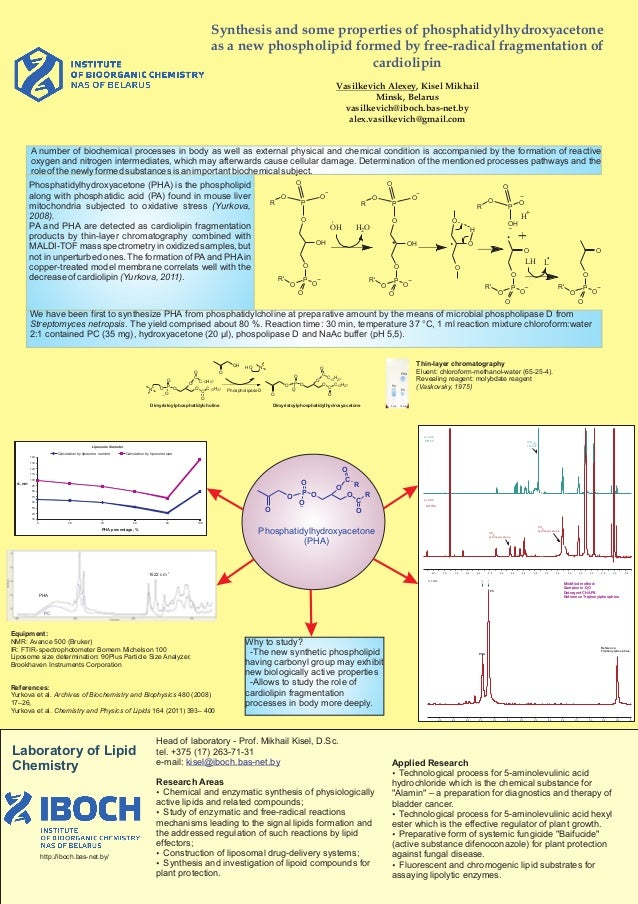 Synthesis and some properties of phosphatidylhydroxyacetone as à new phospholipid formed by free-radical fragmentation of ...