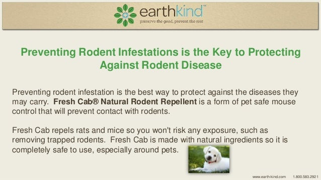 Deadly Dozen And Then Some Diseases Transmitted By Rodents