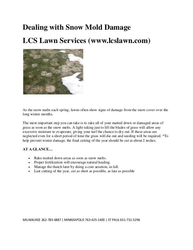Dealing with Snow Mold Damage LCS Lawn Services (www.lcslawn.com)  As the snow melts each spring, lawns often show signs o...