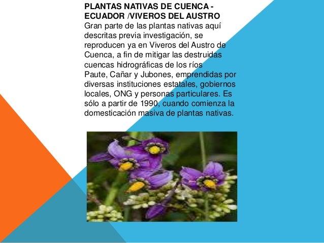 PLANTAS NATIVAS DE CUENCA -ECUADOR /VIVEROS DEL AUSTROGran parte de las plantas nativas aquídescritas previa investigación...