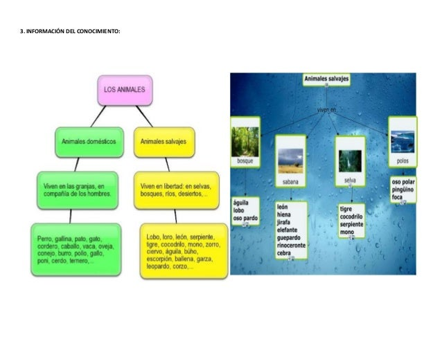 PLANIFICACIÓN ERCA Slide 3