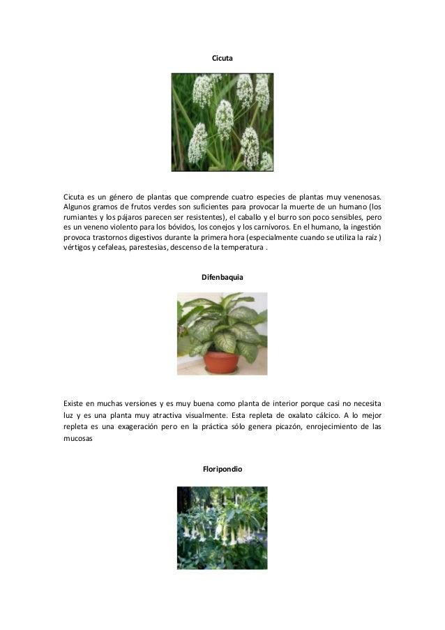 Animales frutas y plantas venenosas - Plantas venenosas de interior ...