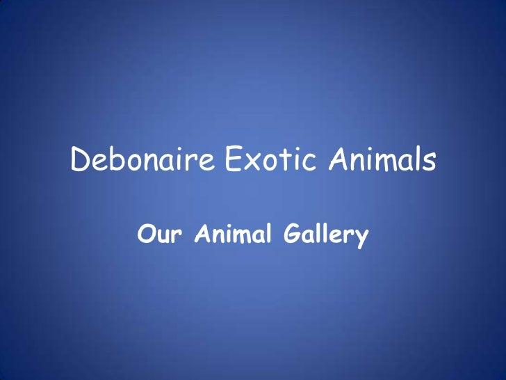 Debonaire Exotic Animals<br />Our Animal Gallery<br />