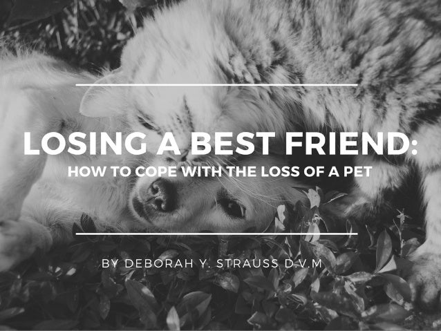 Losing Your Best Friend: How To Cope With The Loss Of A Pet