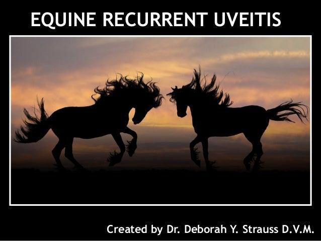 EQUINE RECURRENT UVEITIS Created by Dr. Deborah Y. Strauss D.V.M.