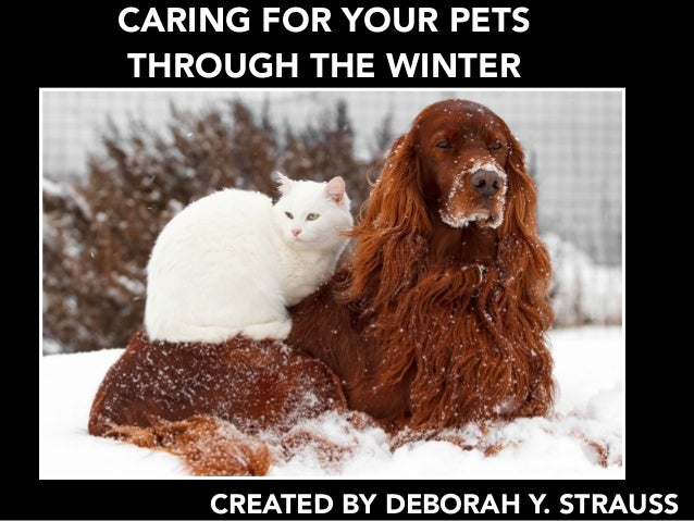 CARING FOR YOUR PETS THROUGH THE WINTER CREATED BY DEBORAH Y. STRAUSS