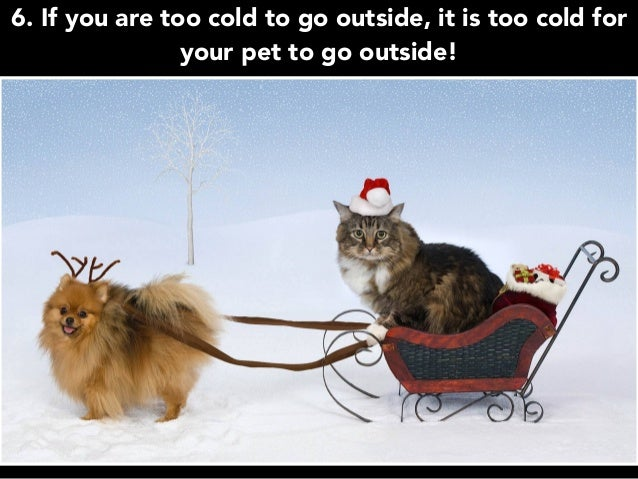 6. If you are too cold to go outside, it is too cold for your pet to go outside!
