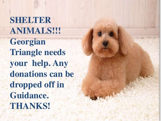 SHELTER  ANIMALS!!!  Georgian  Triangle needs  your help. Any  donations can be  dropped off in  Guidance.  THANKS!