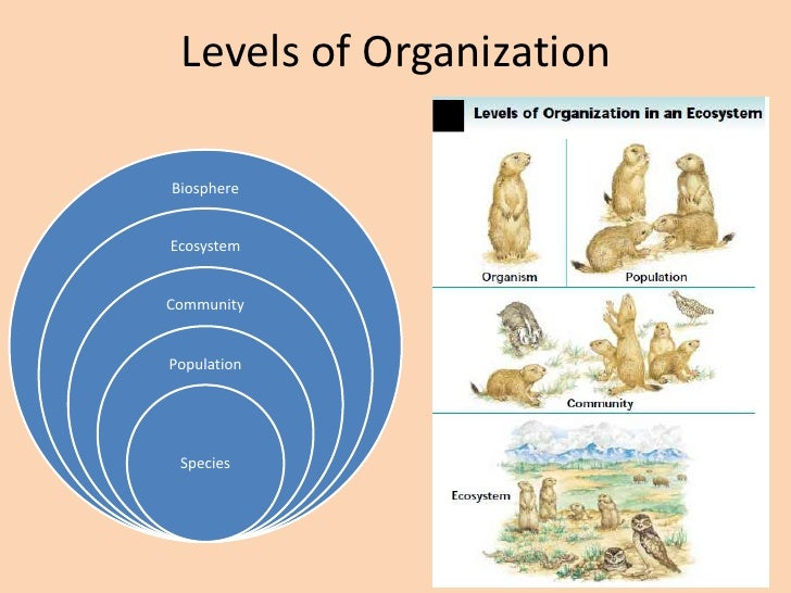 Diagram Of Ecosystem Organization Levels Diy Enthusiasts Wiring