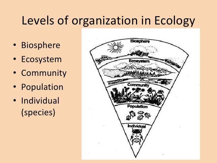 Guide to help you ecology