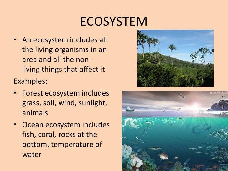 Ecology Levels Of Organization