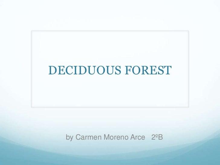 DECIDUOUS FOREST  by Carmen Moreno Arce 2ºB