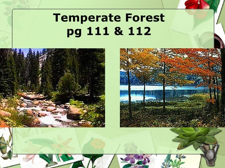 Temperate Forest pg 111 & 112
