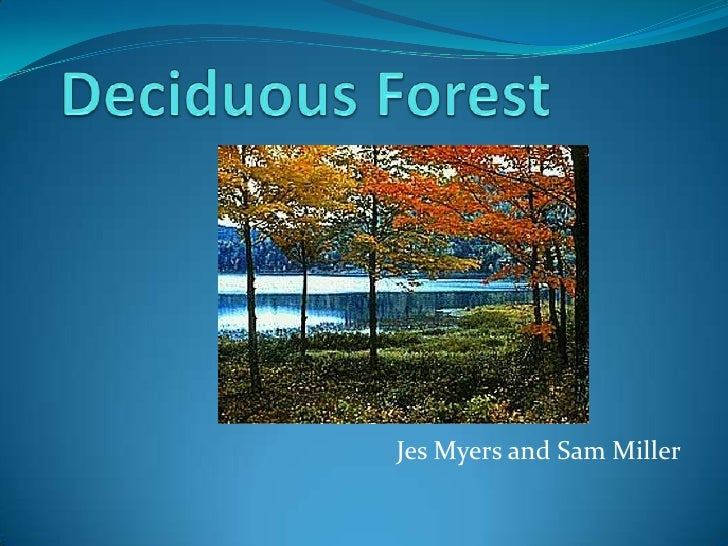Deciduous Forest<br />Jes Myers and Sam Miller<br />