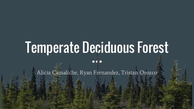 Temperate Deciduous Forest Alicia Camaliche, Ryan Fernandez, Tristan Orozco