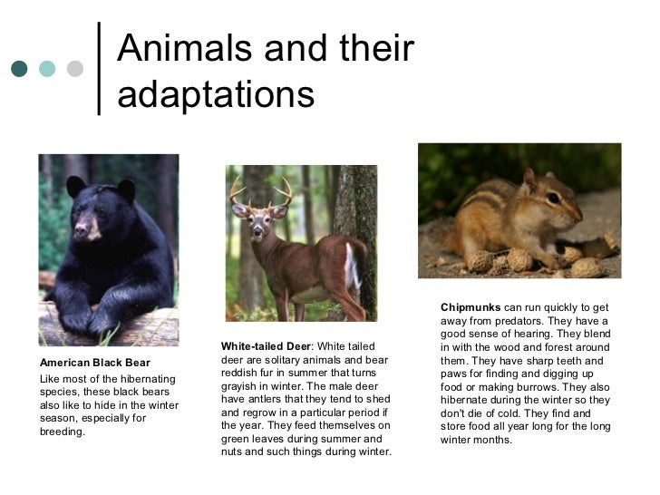 Adaptations – Biology for Kids
