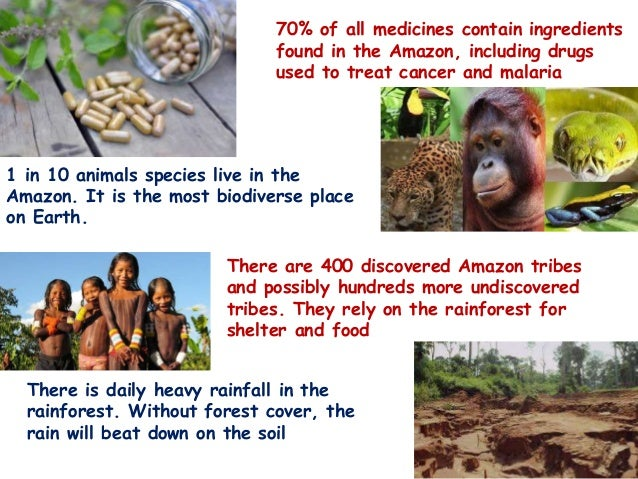 70% of all medicines contain ingredients found in the Amazon, including drugs used to treat cancer and malaria 1 in 10 ani...