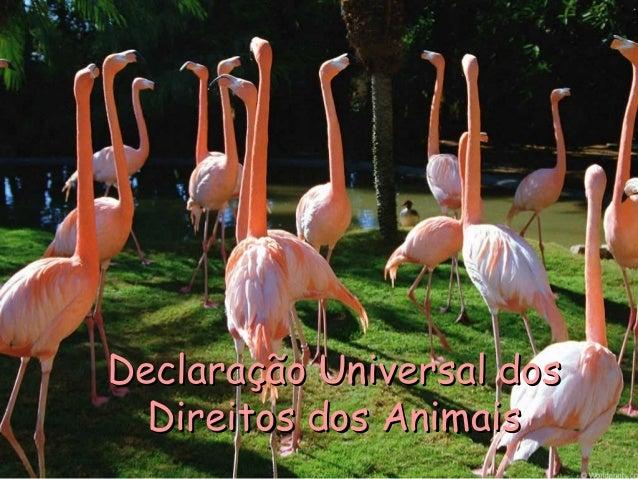 Declaração Universal dosDeclaração Universal dos Direitos dos AnimaisDireitos dos Animais