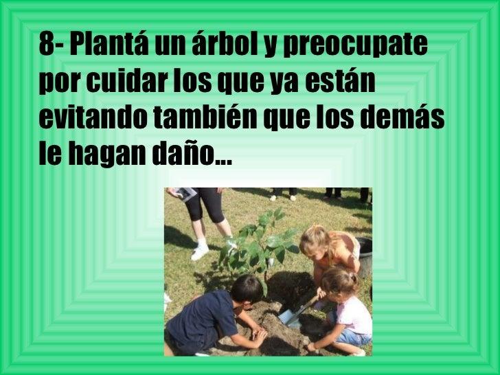 8- Plantá un árbol y preocupate por cuidar los que ya están evitando también que los demás le hagan daño...