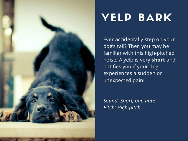 Ever accidentally step on your dog's tail? Then you may be familiar with this high-pitched noise. A yelp is very short and...