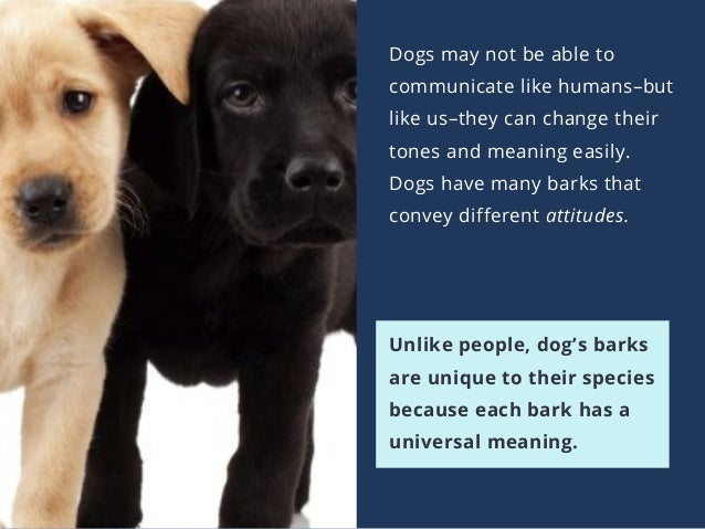 Dogs may not be able to communicate like humans–but like us–they can change their tones and meaning easily. Dogs have many...