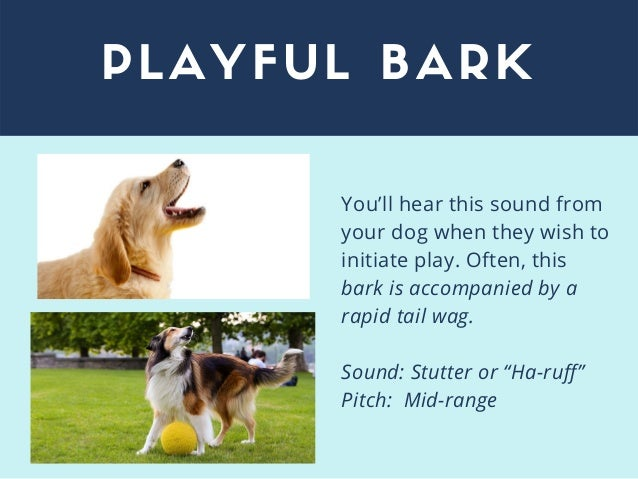 PLAYFUL BARK You'll hear this sound from your dog when they wish to initiate play. Often, this bark is accompanied by a ra...