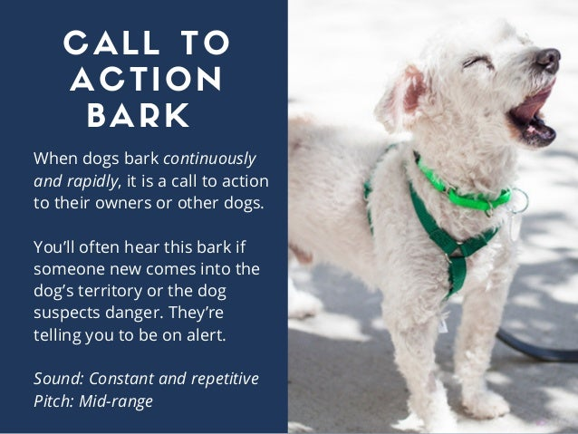 When dogs bark continuously and rapidly, it is a call to action to their owners or other dogs. You'll often hear this bark...